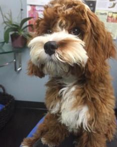 Sadie profile pic